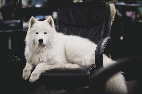 Rover.com's list of the Best Dog-Friendly Companies in the US includes Procore Technologies at No. 2