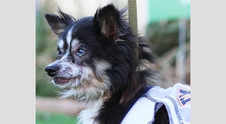 Dog of the Week: Kiwi