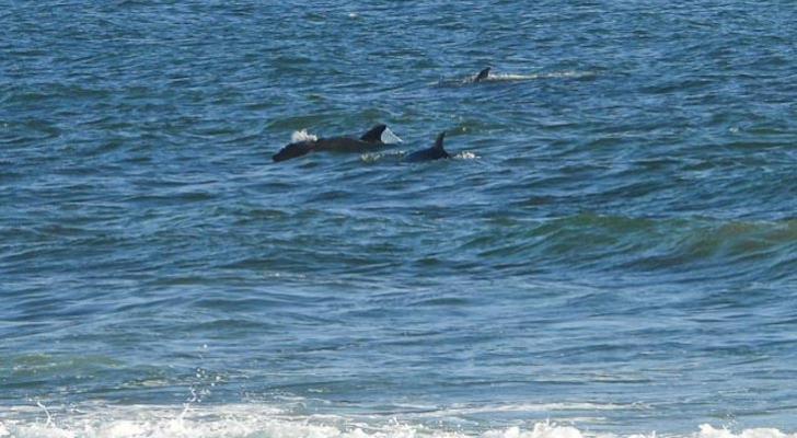 Rincon Dolphins