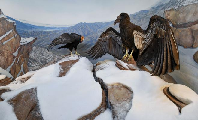 Museum of Natural History to Unveil Newly Transformed Mammal and Bird Halls and New Santa Barbara Gallery June 2