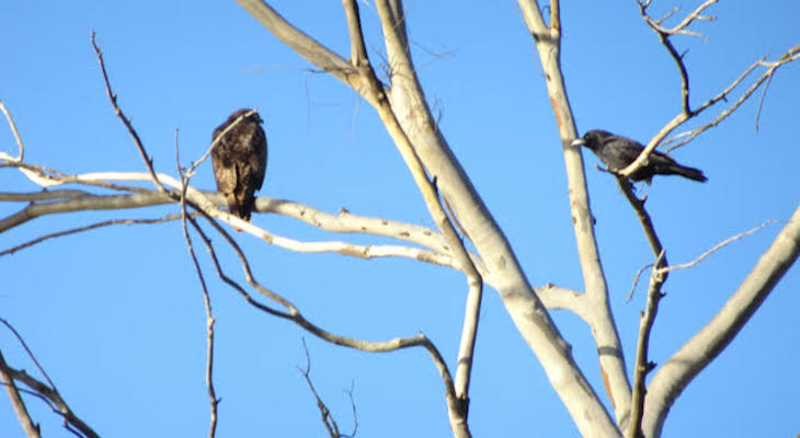 Bird Friends title=