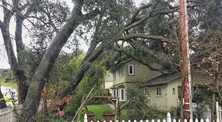 Oak Tree Falls on Los Alamos Home