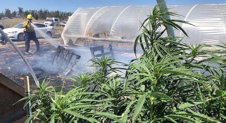 Sheriff's Deputies Raid Cannabis Farm Near Sweeney Fire title=
