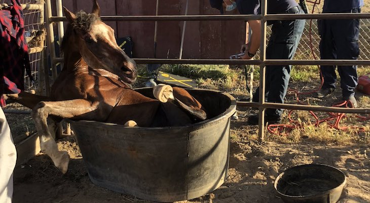 Horse Rescued from Water Trough