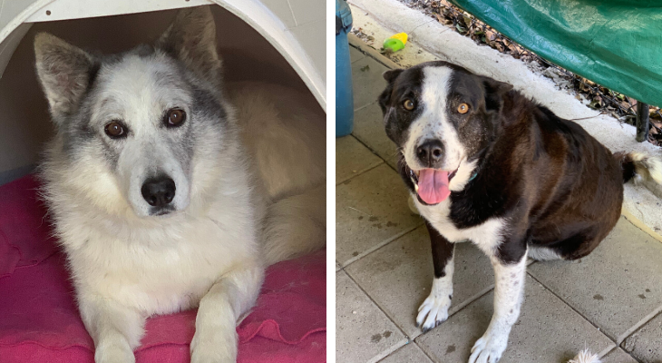 Dogs of the Week: Eddie and Connie