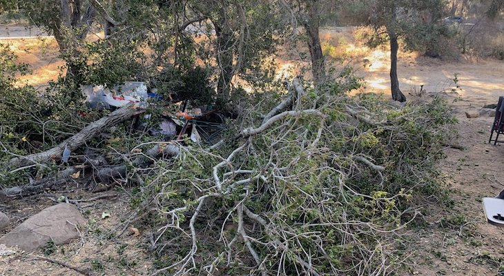 Child Escapes Fallen Tree at Lake Cachuma title=