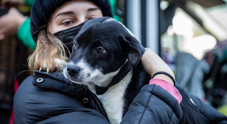 Santa Barbara Welcomes Adoptable Dogs from Texas