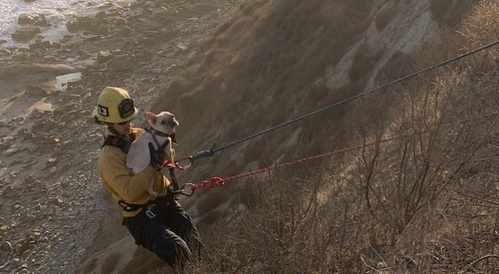 Dog Rescued from More Mesa Cliff title=