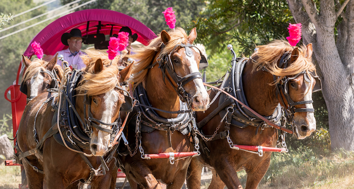 Rancheros Visitadores Raise Over $1 Million for Cancer Center
