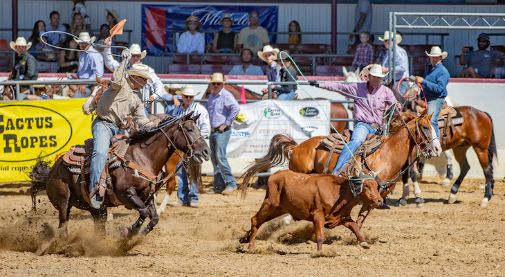 Stock Horse Show and Rodeo Highlights