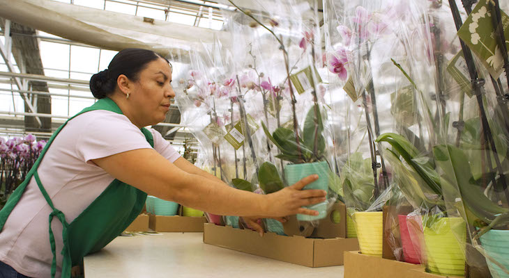 Westerlay Orchids Leases New Greenhouse