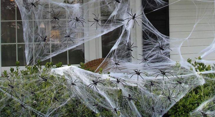 Beware, Fake Halloween Cobwebs Threaten Wildlife  title=