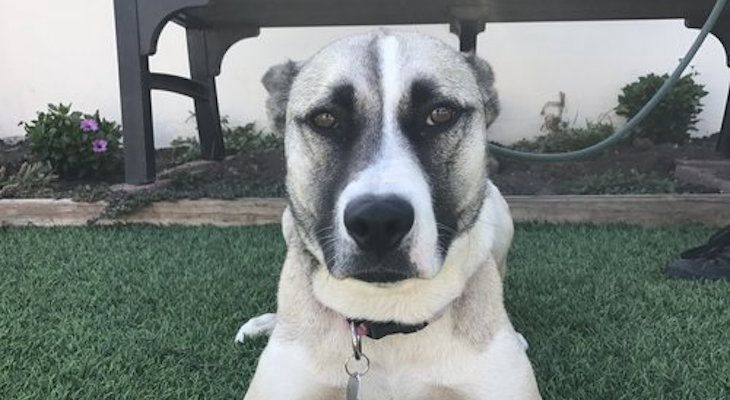 Dog of the Week: Harley title=