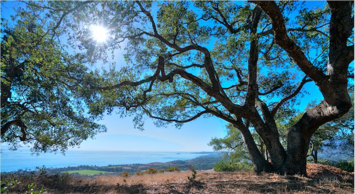 Botanic Garden and Land Trust Team Up to Preserve 88 acres in Toro Canyon