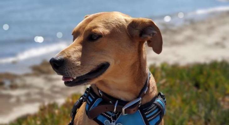 Dog of the Week: Jax