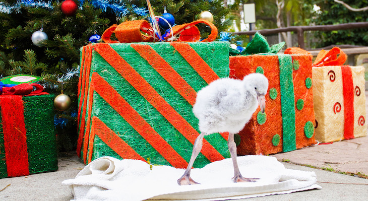 Santa Barbara Zoo Decks the Halls for Holiday Zoo! title=