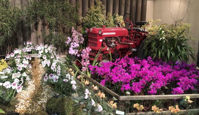 Orchids Brighten Up Earl Warren Showgrounds