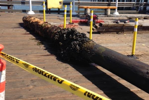 Pilings Replaced at Stearn's Wharf title=