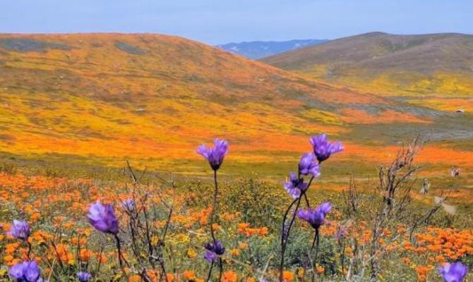 Hiking the California Poppy Preserve title=