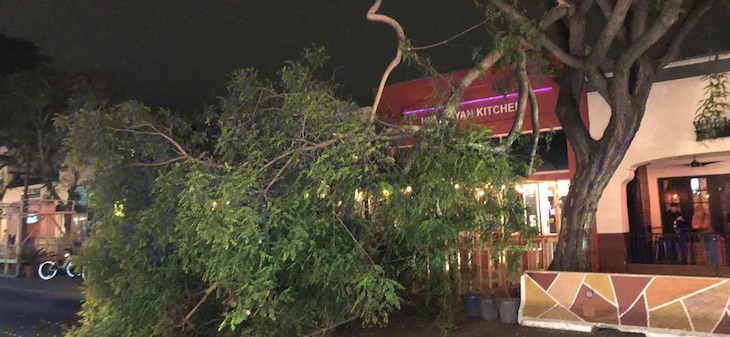 Large Branch Crashes Into Downtown Dining Area