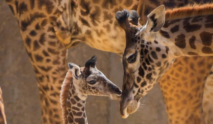 Santa Barbara Zoo to Reopen June 23 title=