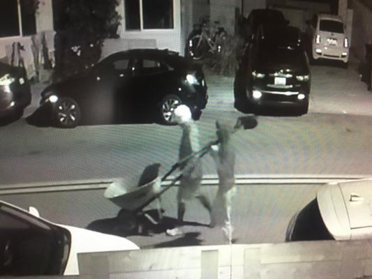 Flower Thieves Caught on Camera