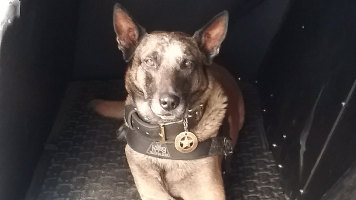 Only Female CHP K-9 Officer Patrols Central Coast