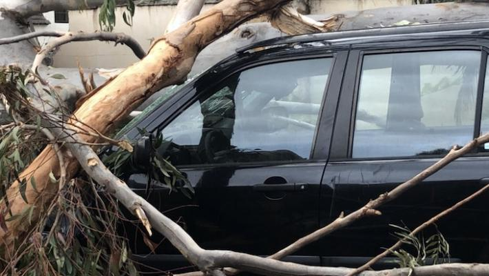 Montecito Tree Crushes SUV