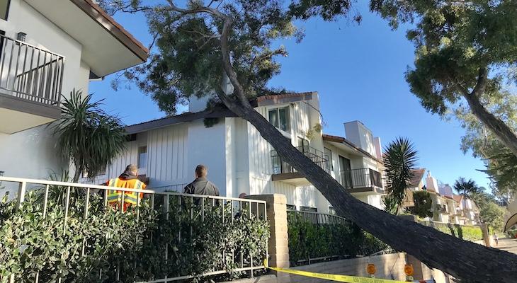 Eucalyptus Tree Falls on Home title=