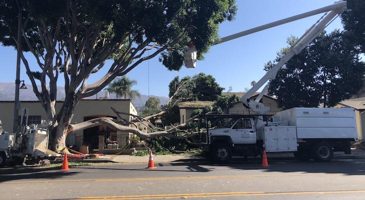Milpas Tree Falls on Roof
