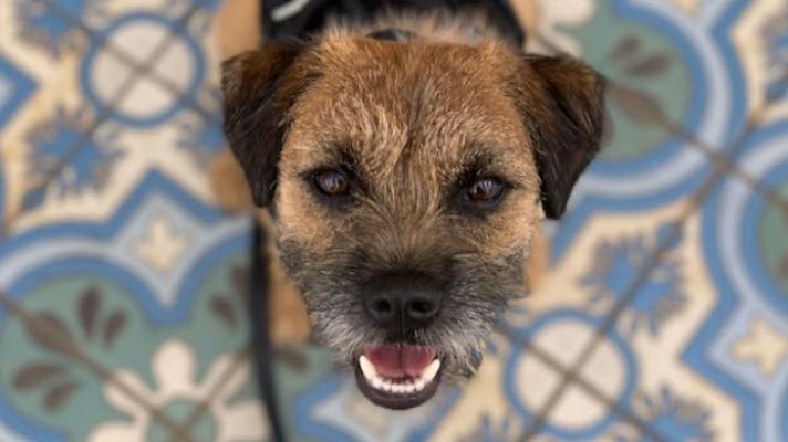 Dog Training Skills for a Pawsitively Super Santa Barbara Summer title=