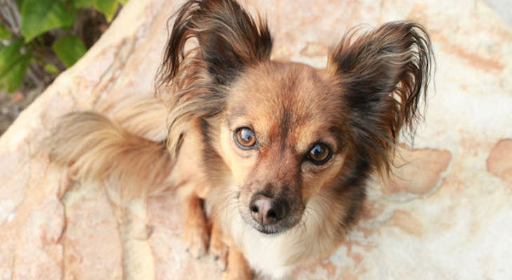 Creating a Pawsitive Cultural Shift for the Love of Dogs title=