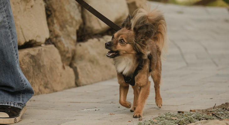 A Walk in the Park: Leash Walking Tips for You and Your Pup title=