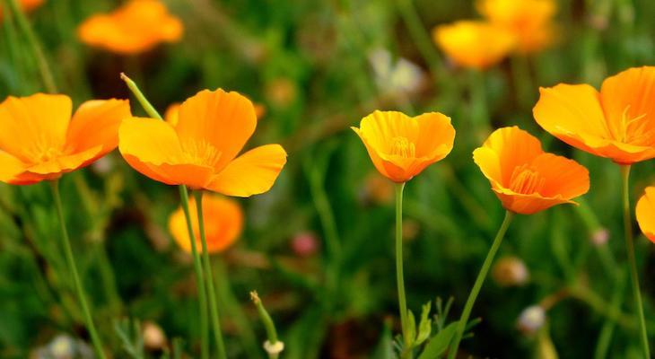 Figueroa Mountain Wildflower Update 2 title=