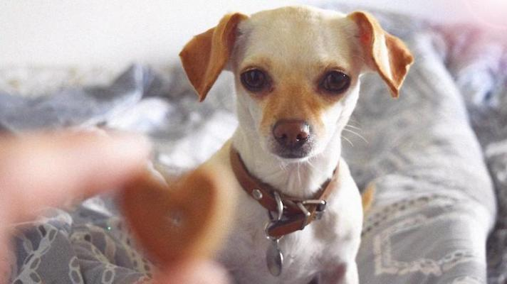 The Inside Scoop on Using Treats in Dog Training title=