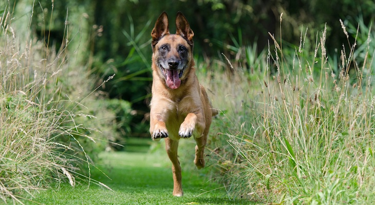 A Closer Look at Dog Training Techniques: Part One