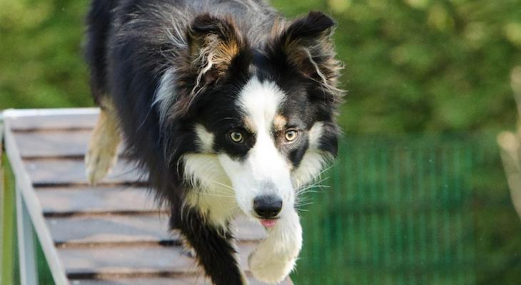 A Closer Look at Dog Training Techniques: Part Two