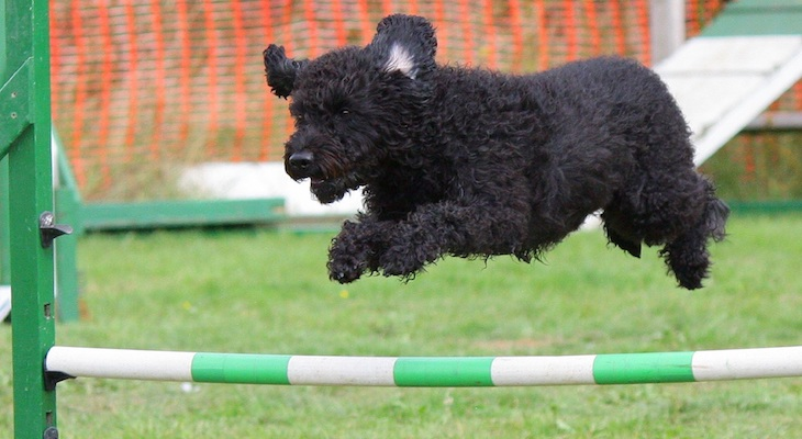 Regulations and Oversight in the Dog Training Industry?