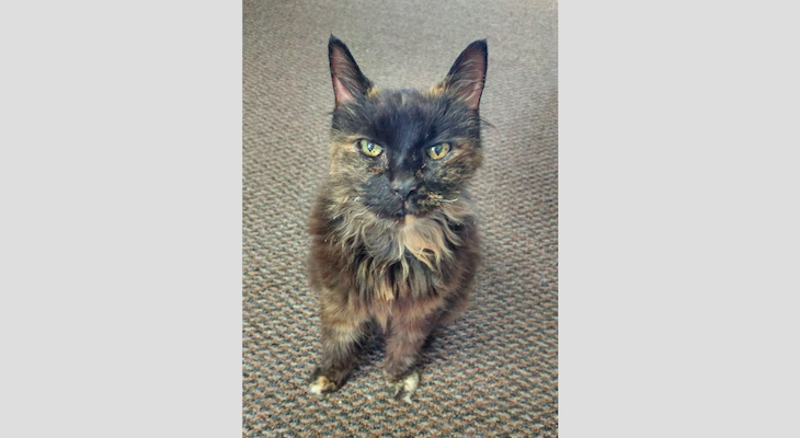 Cat of the Week: Kelly title=