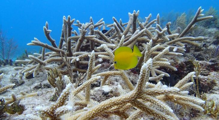 Facilitating Coral Restoration
