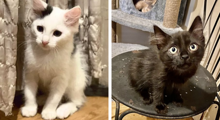 Cats of the Week: Licorice and Louie