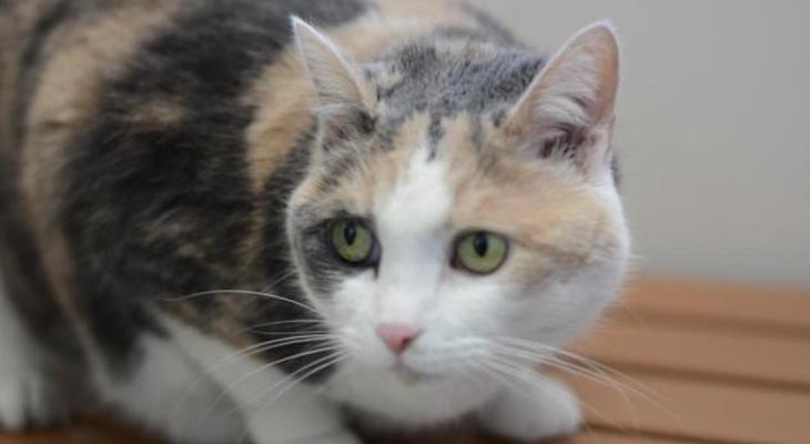 Cat of the Week: Little Girl