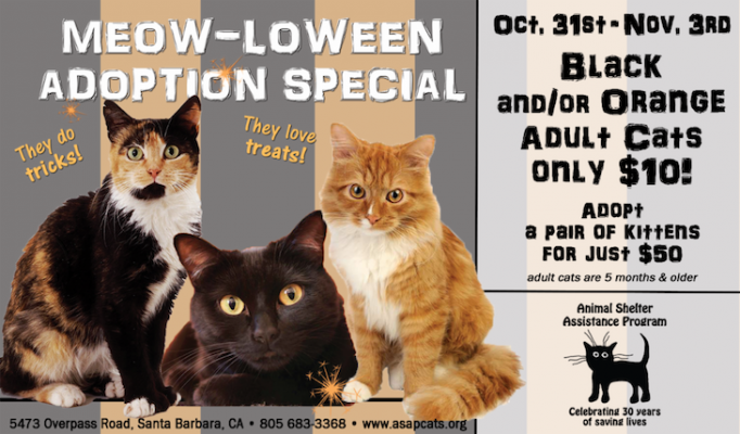 Meow-loween Adoption Special