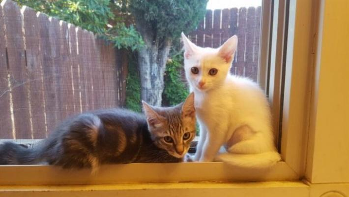 Cat of the Week: Mickey and Minnie