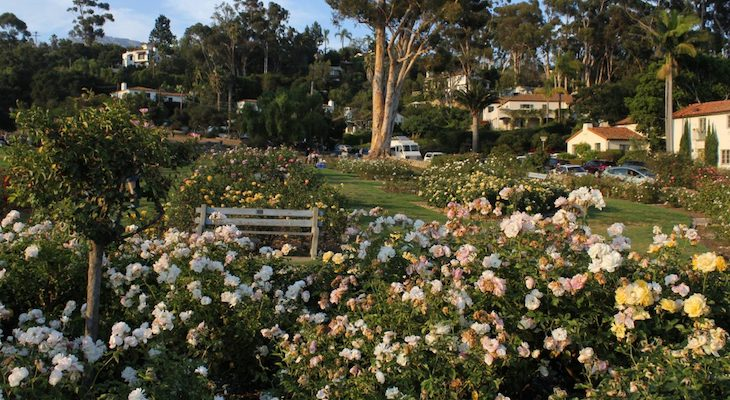 Rose Pruning Event at the A. C. Postel Memorial Rose Garden Canceled
