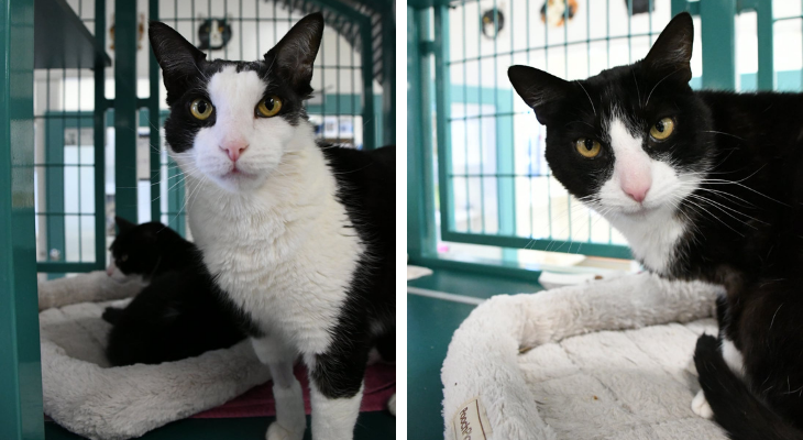 Cats of the Week: Moe and Seamus title=