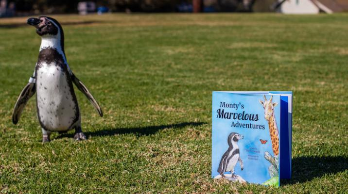 """Santa Barbara Zoo Announces Next Chapter in Monty the Penguin's Rise to Stardom: """"Monty's Marvelous Adventures"""""""
