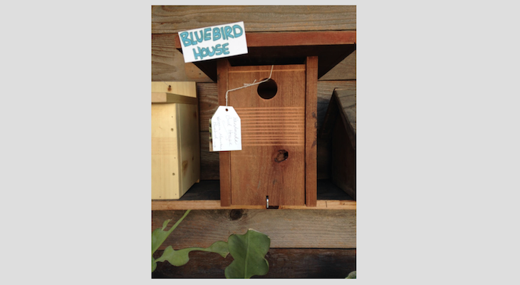 Nesting Bird Box Tips