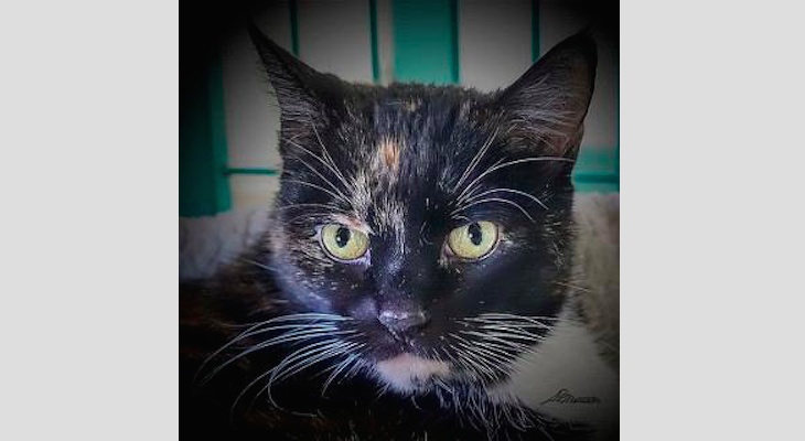 Cat of the Week: Libby