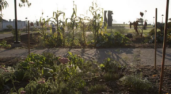 SBCC Permaculture Gardens Win Prestigious Award title=